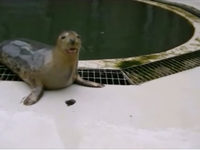 I Hate Earnestness, But I Love These Singing Seals