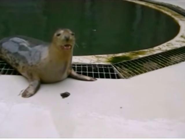 Je déteste le sérieux, mais j'aime ces phoques qui chantent