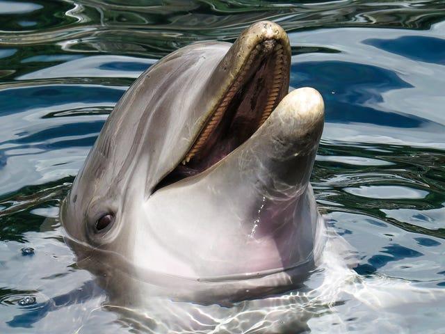 Cierran una playa francesa por culpa de delfiner que intentaba tener sexo con los bañistas