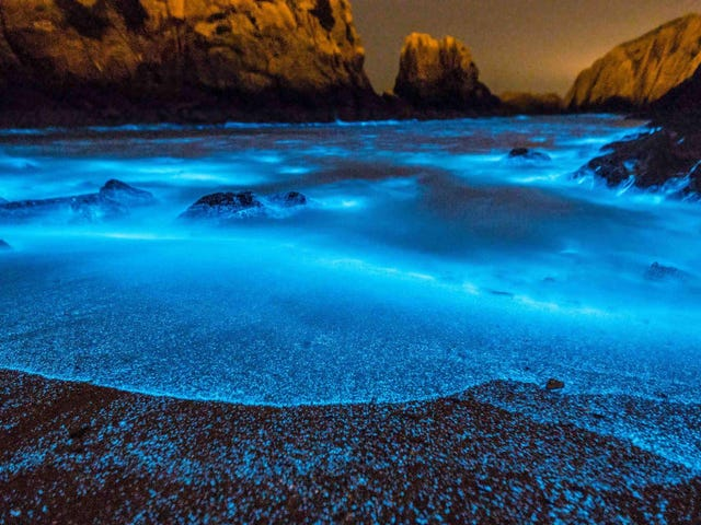 Stunning but Deadly, China's Bioluminescent Algal Blooms Are Getting Bigger