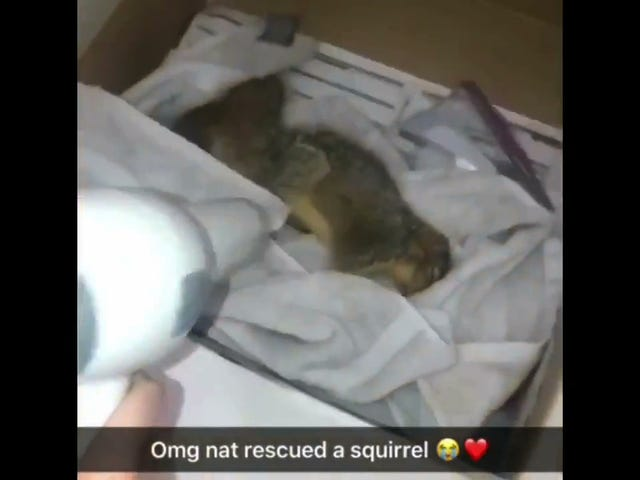 CMU Soccer Player Rescues Drowning Squirrel, Revives It With CPR Thanks In Part To The Office