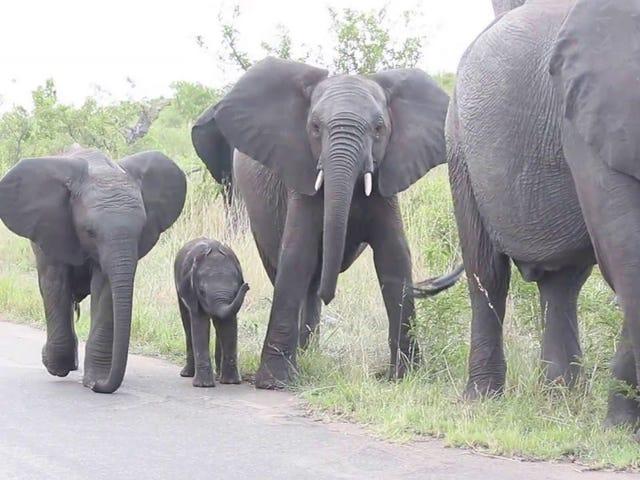 나는 코끼리를 좋아한다.  특히 아기 코끼리