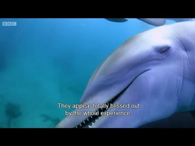 Puff, the Magic Dolphin, Lived in the Sea...