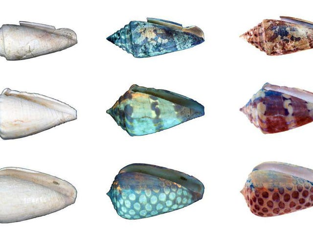 UV Light Reveals the Former Glory of Aging Seashells