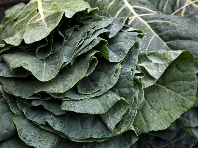 Bad Weather Is Messing With Your Collard Greens