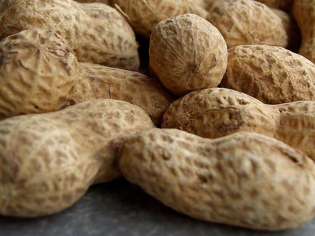最初のピーナッツアレルギー薬は間もなく承認される可能性がありますが、論争なしではありません