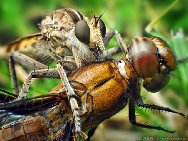 Things that make you go 'Nope':  WTFlies!