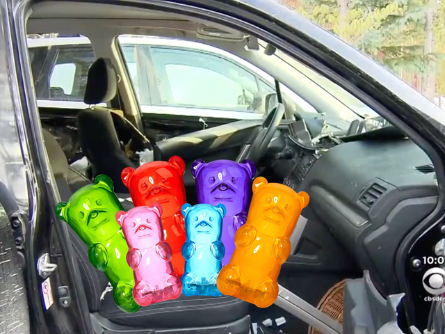 Bear Breaks Into Subaru to Eat Miniature Candy Versions of Itself