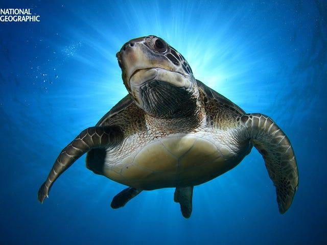 Luminous Nature Photographs Will Restore Your Sense of Wonder