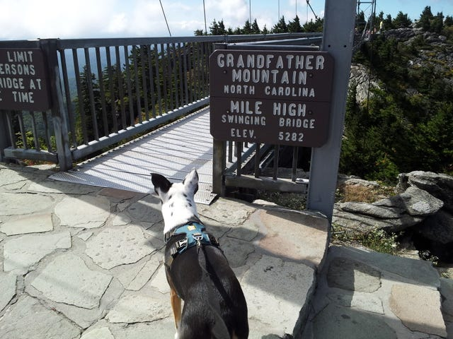 Mountain Drive with Doggo