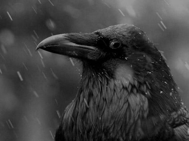 Runde1: Die 15. Art, den Regen zu beschreiben