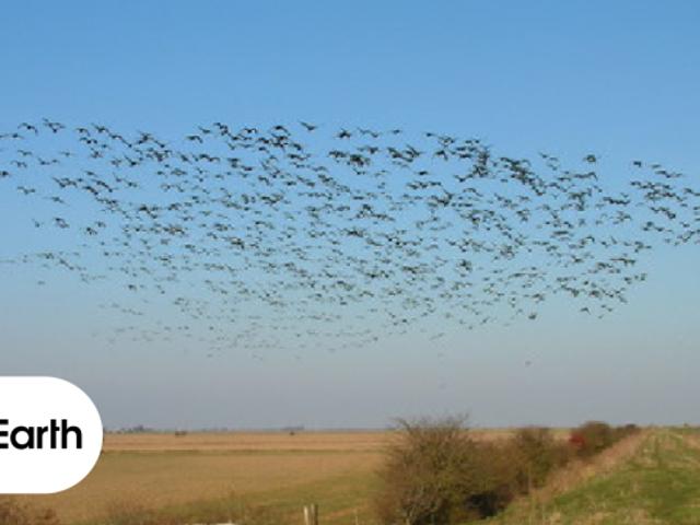 Οι αυξανόμενες θερμοκρασίες οδηγούν εκατοντάδες είδη στους βόρειους και νότιους Πολωνούς