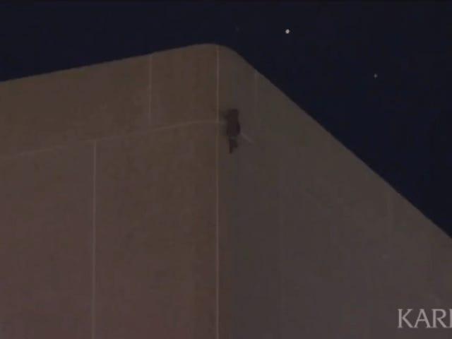 MPRのアライグマは23階建てのオフィスビルを登った後、屋根に到達し、インターネット感覚になる