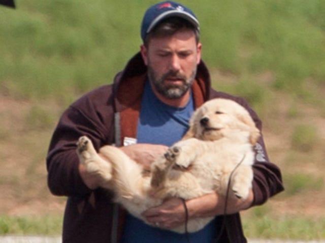 Бен Аффлек не знает, как держать собаку