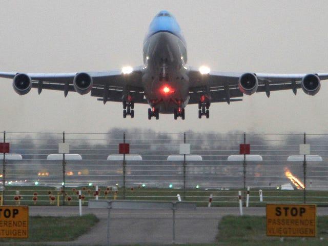 Puppy chết trên chuyến bay của KLM từ Amsterdam đến Boston