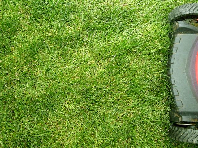 Astronomer er rasende om Roomba gressklipperen