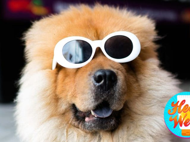 How to Keep Your Dog From Getting Overheated