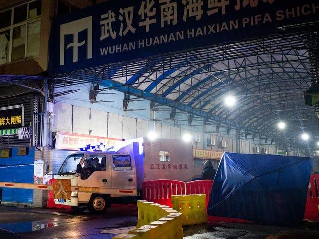 Deadly Mystery Virus sprer seg utenfor Kina til nye land