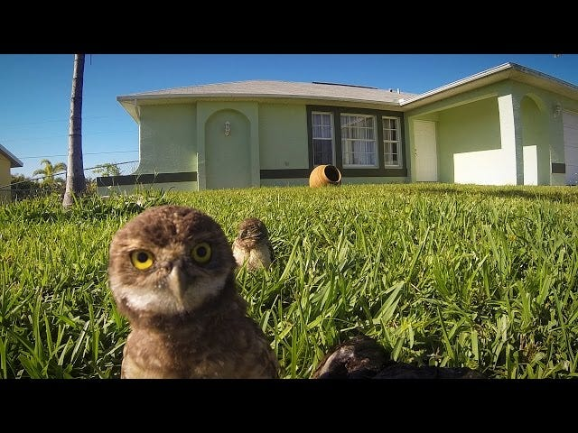 These Owls are Dropping the Hottest Dance Moves of 2015