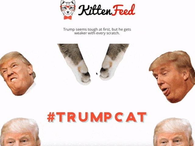 Trump Is Going After Teen's 'Kittens Scratch Trump' Site