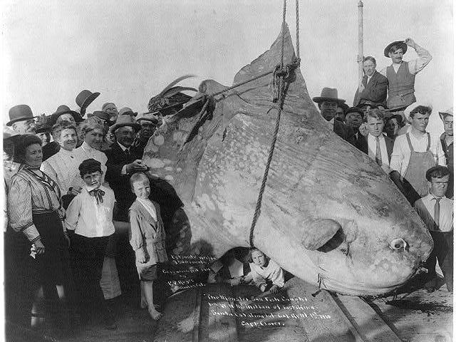 Stor fisk