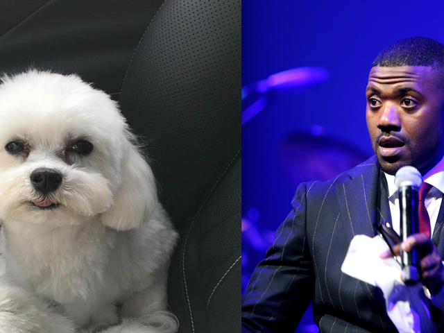 Ray J's Dog Boogotti Has Been Dognapped, Please Return Him for a $20,000 Reward