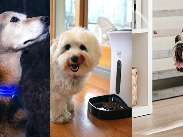 Six Great Smart Devices For Your Furry Friend