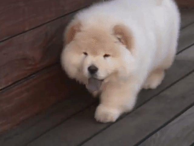 ジャスティンビーバーの犬トッドが生きていることの証明