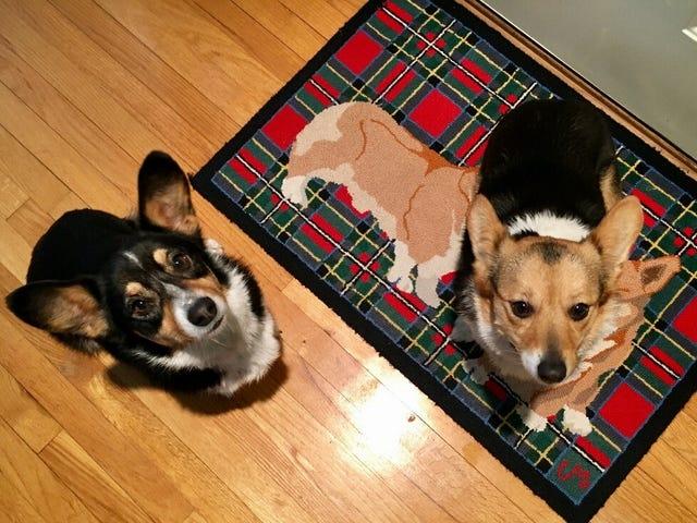 Doggos !!!