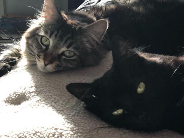 Ебать ці кішки Бугі
