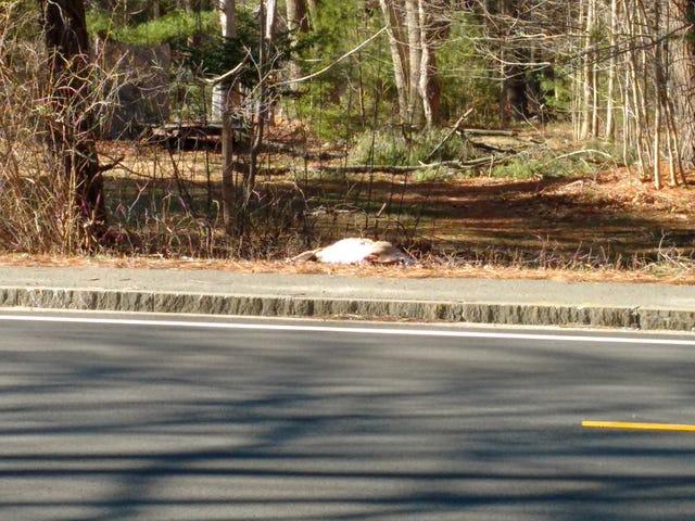 Varför korsade Bambi vägen?