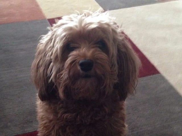 Phil Kessel: Nice Roommate, Tries Hard, Loves His Goldendoodle
