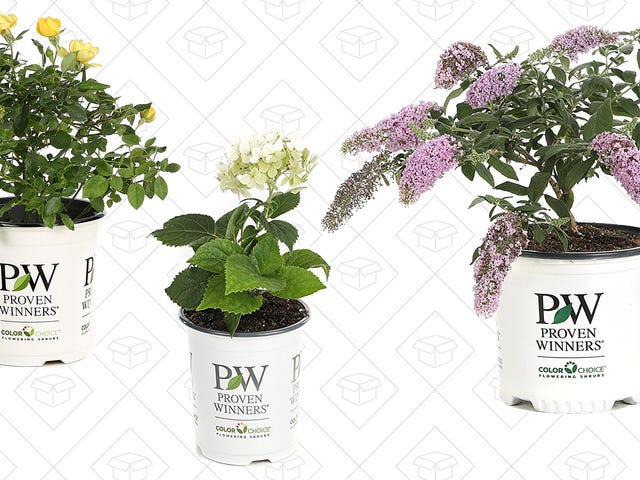 Bring Spring Inside With Even More Discounted Plants from Amazon