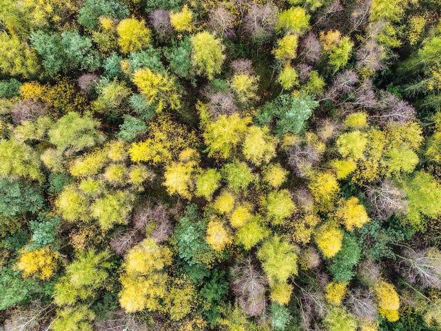 Niebezpieczne uwodzenie trylionów drzew