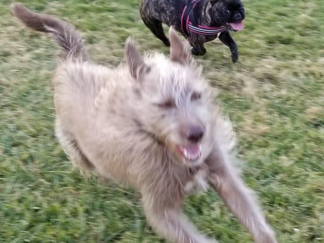 Pup en DOTS