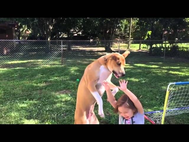 """Le visage du chien dit """"j'ai commis une énorme erreur"""" juste avant de tomber sur un enfant"""