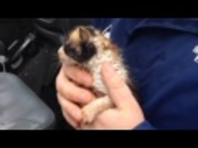 Weatherman Rescues Kitten From Tornado Rubble