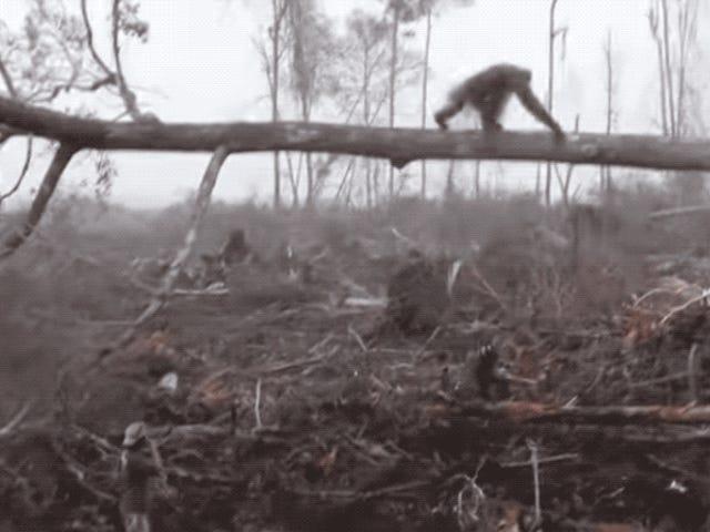 Odzyskiwanie danych z repozytorium de un orangután tratando de ahuyentar la excavadora ilegal que destroza su bosque