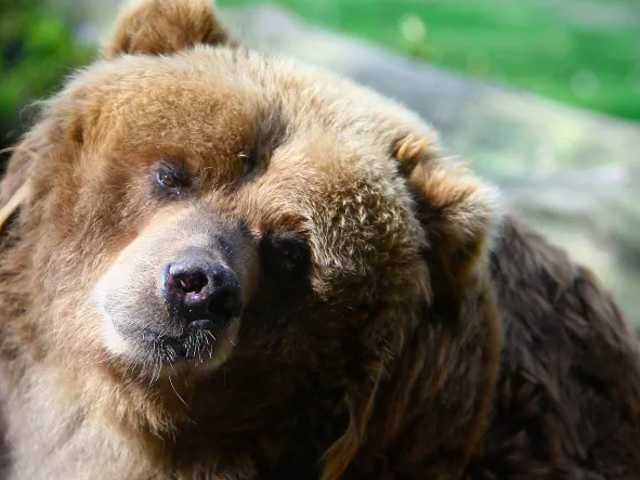 I Don't Care What 'Experts' Say, a Bear Definitely Saved a Toddler From Dying in the Woods
