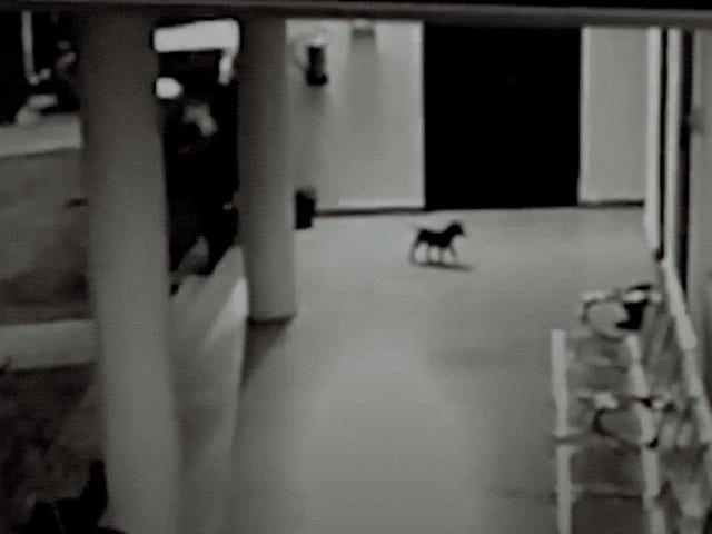 El impactante momento og el que una perra derriba y persigue al leopardo que atacó a su cachorro