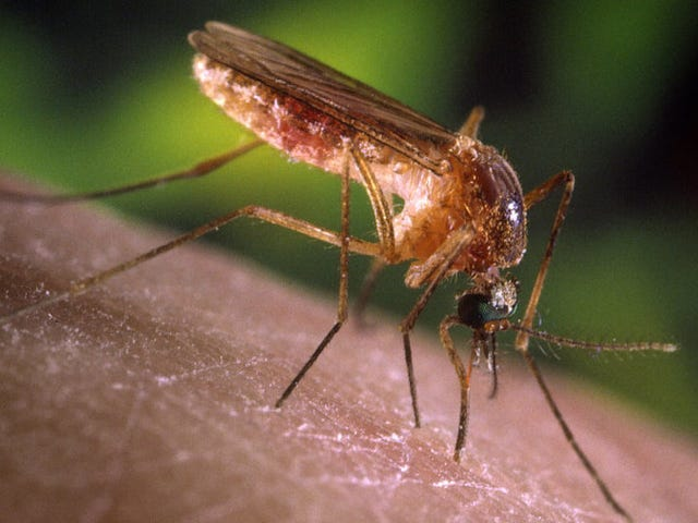 What to Know About West Nile Virus This Summer