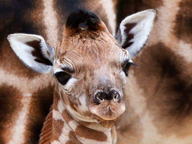 หากคุณไม่มีอะไรที่ดีที่จะพูดเกี่ยวกับสัตว์ทารกอย่าพูดอะไรเลย