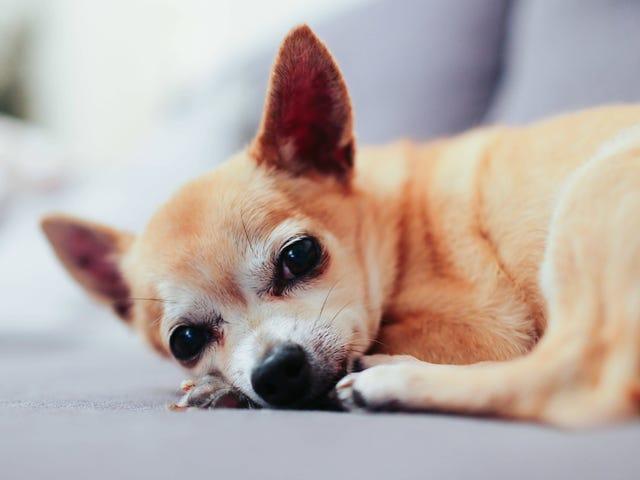 ¿Por qué la ansiedad te despierta por la noche y cómo recuperar tu descanso?