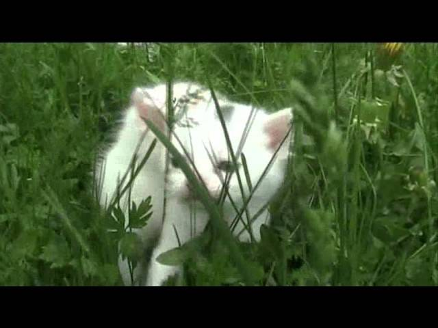 Caturday! `` `` `Theme ~~ Kittens And Grass ~~` `` `` ``