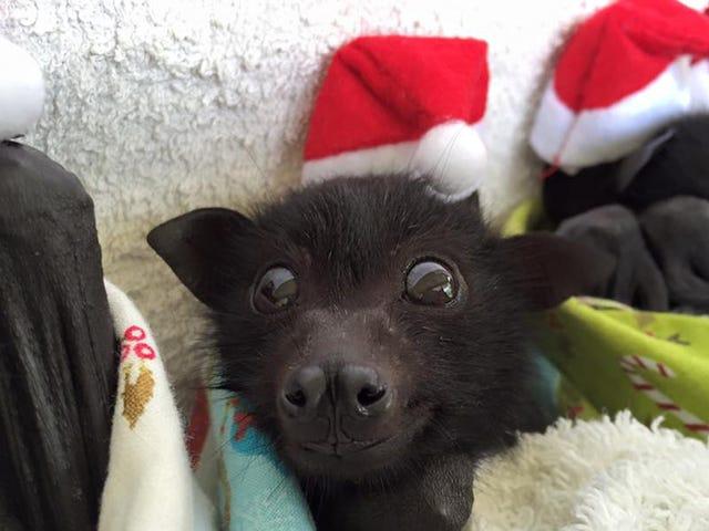 Bats in Hats