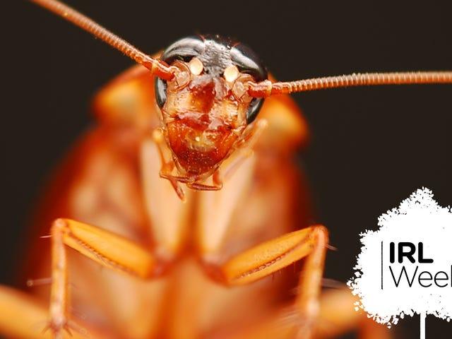 Araignées, poison et eau bouillante: les meilleures (et les pires) façons de tuer les cafards