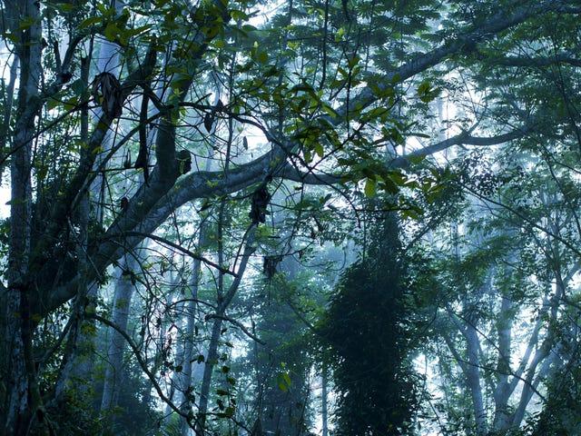 世界で2番目に大きい熱帯雨林は何千年もの間それが持っている炭素を失います
