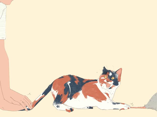 Kita Perlu Lakukan Sesuatu Mengenai Kucing Luaran
