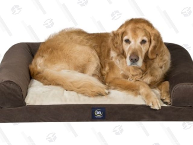 """<a href=""""https://kinjadeals.theinventory.com/fetch-your-dog-a-memory-foam-bed-for-only-50-1828036146"""" data-id="""""""" onClick=""""window.ga('send', 'event', 'Permalink page click', 'Permalink page click - post header', 'standard');"""">Fetch Your Dog A Memory Foam Bed For Only $50</a>"""