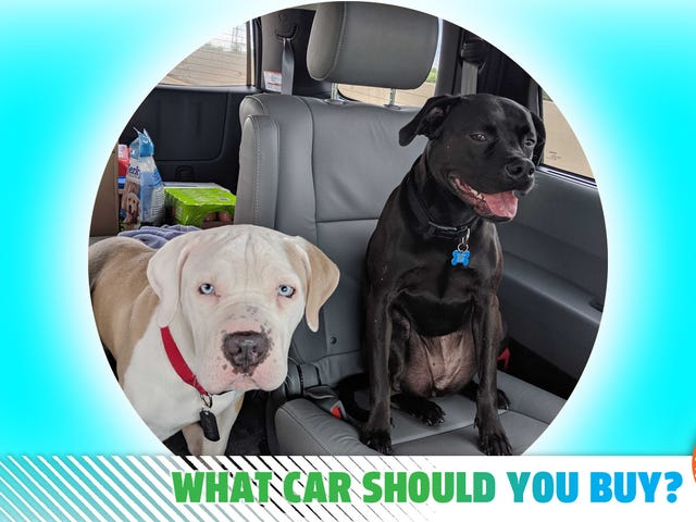I Adopted A Dog During Quarantine, Now It's Time For A New Ride! What Car Should I Buy?